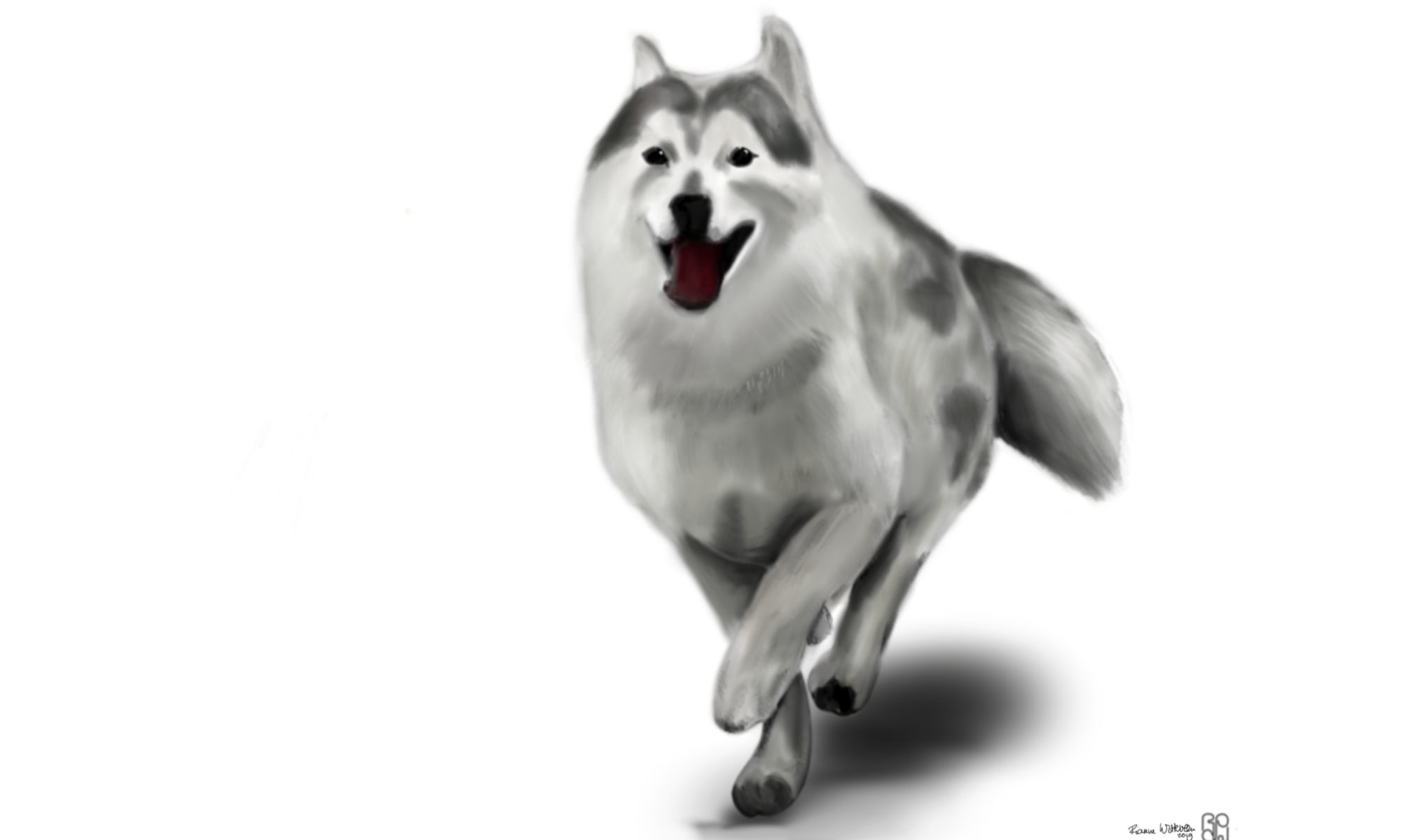 husky ipad procreate